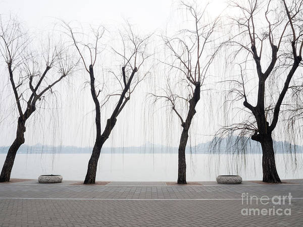 Wall Art - Photograph - Willow Trees On The Lakeside In Beihai by Amehime