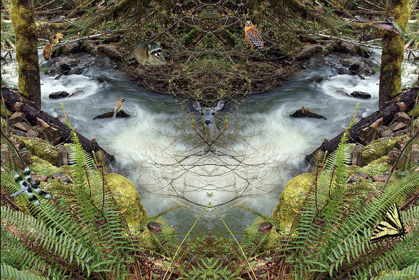 Photograph - Wilson Creek Mirror Art 2019 #1 With Critters by Ben Upham III