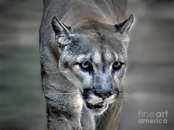 Puma Digital Art - Wild Cat by Savannah Gibbs