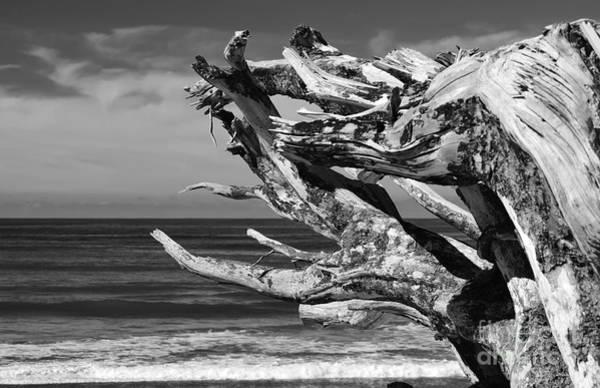 Photograph - Wind Drift by Jeni Gray