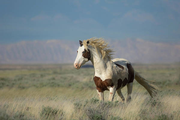 Wall Art - Photograph - Wind In His Hair by Sandy Sisti