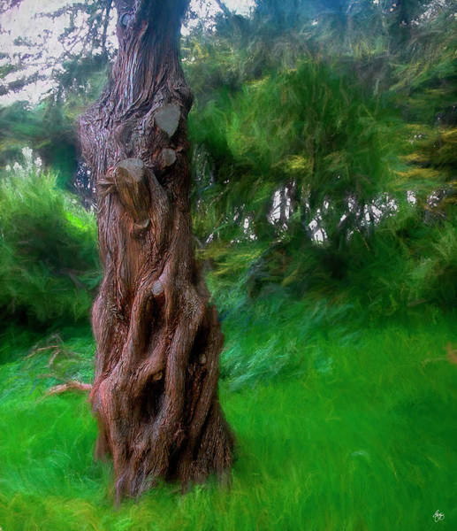 Photograph - Wind In The Cedar by Wayne King
