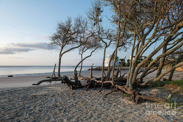 Photograph - Wind Swept Coastal Tree's by Dale Powell