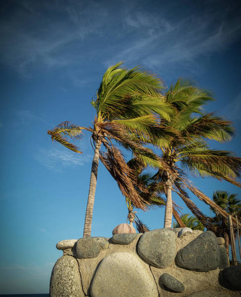Wall Art - Photograph - Wind Swept Palms by Jean Noren