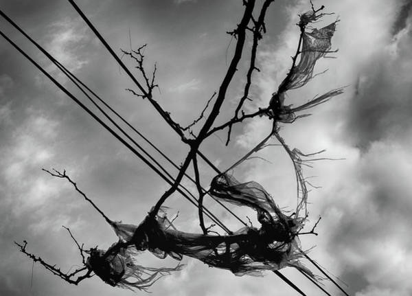 Photograph - Wind, Wires And Plastic by Cate Franklyn