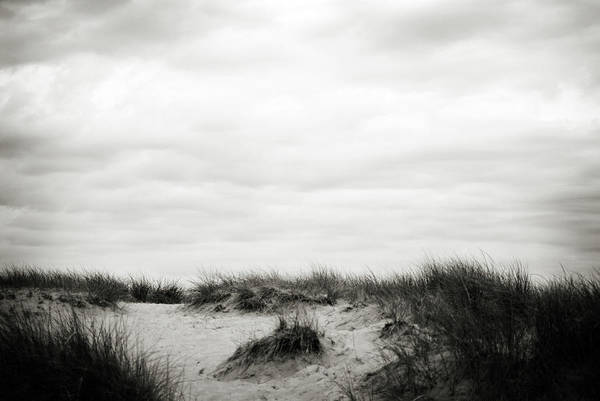 Photograph - Windblown by Michelle Wermuth