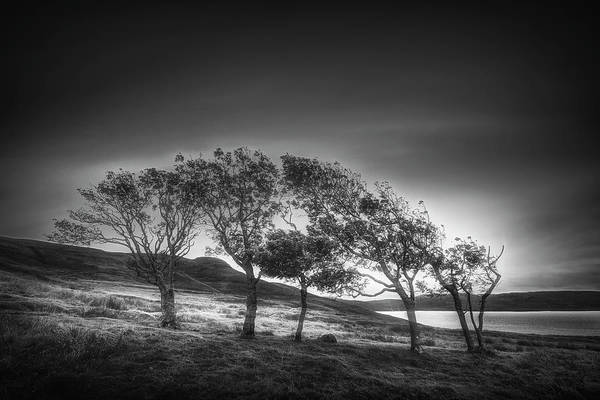 Photograph - Windblown On The Edge In Black And White by Debra and Dave Vanderlaan