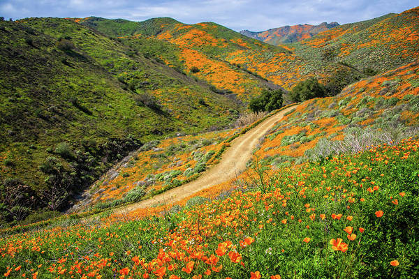 Photograph - Winding Through The Poppies In Walker Canyon by Lynn Bauer