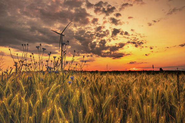 Wall Art - Photograph - Windmill by Albert Moczadlo