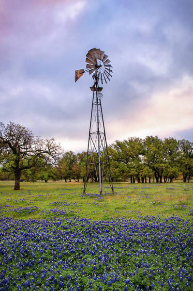 Photograph - Windmill And Bluebonnets by Harriet Feagin