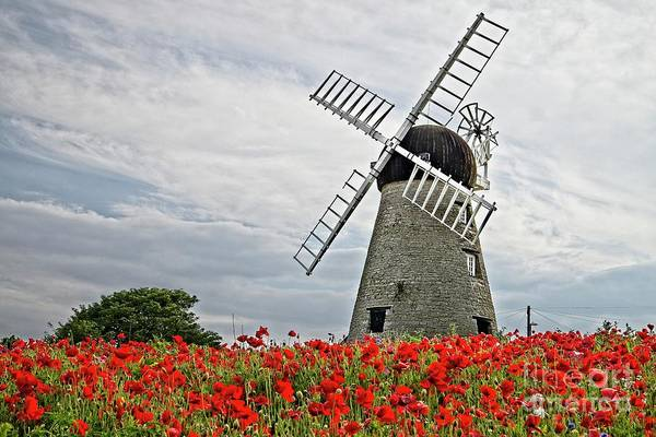 Photograph - Windmill And Poppies by Martyn Arnold