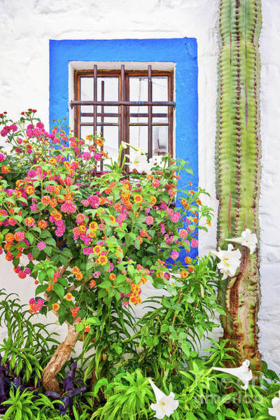 Wall Art - Photograph - Window And Flowers by Delphimages Photo Creations