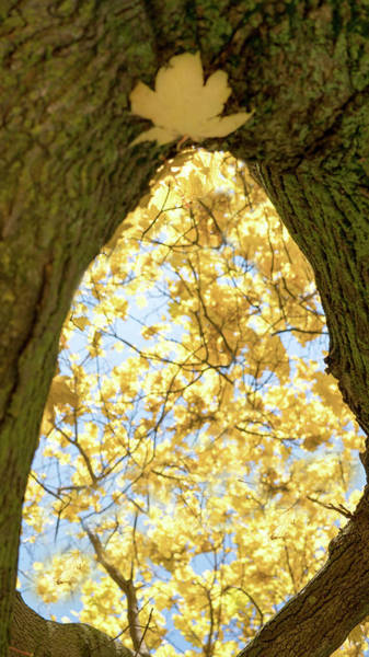 Photograph - Window In Nature by Nick Mares
