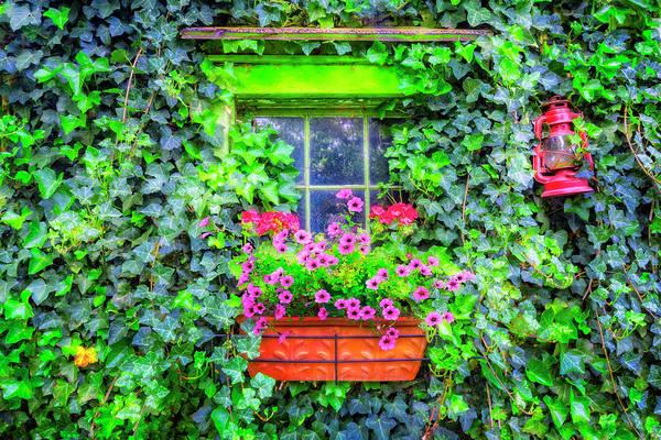 Photograph - Window In The Ivy by Debra and Dave Vanderlaan