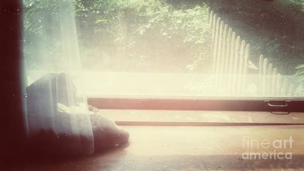 Photograph - Window Sill Cat by Jenny Revitz Soper