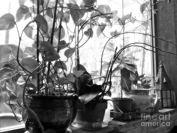 Wall Art - Photograph - Window Sill Winter Garden by Sarah Loft