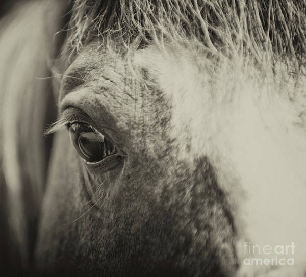 Photograph - Window To The Soul by Dale Powell