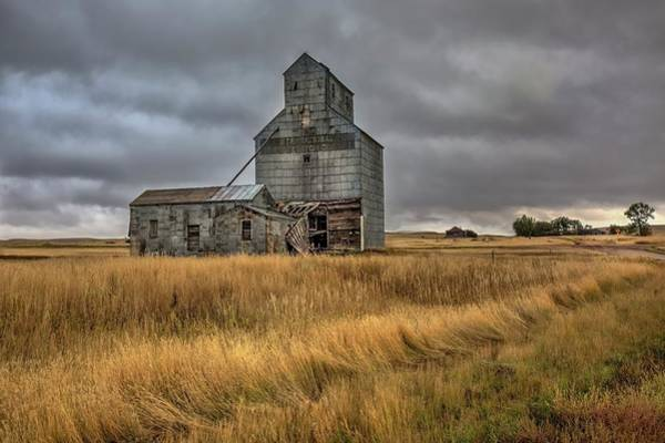 Photograph - Windswept Guardian  by Harriet Feagin