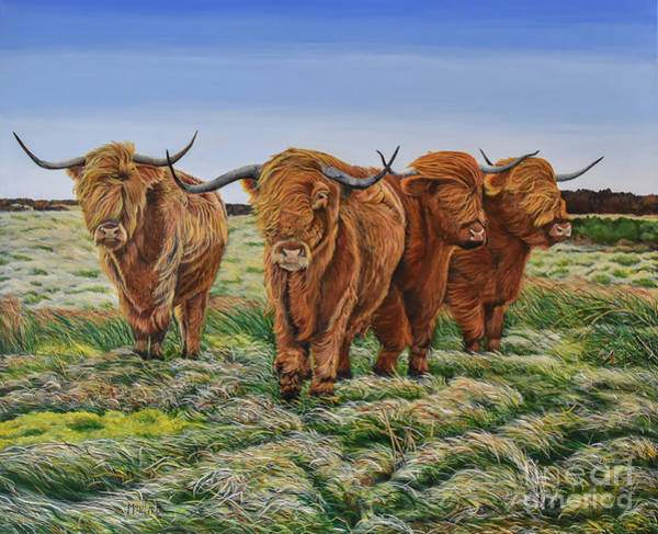 Painting - Windswept Highland Cattle  by Marilyn McNish