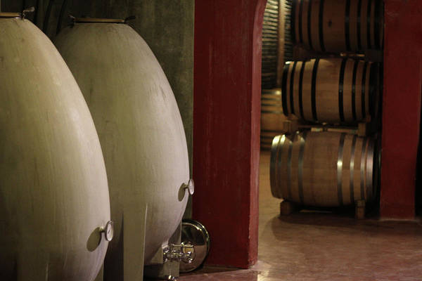 Winemaking Photograph - Wine Cellar by Tom And Steve
