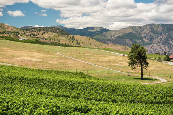 Photograph - Wine Country by Kristopher Schoenleber