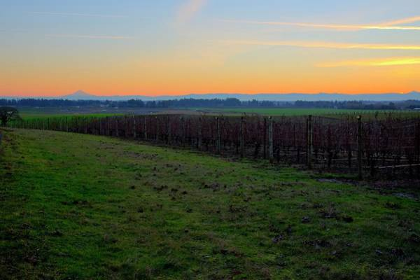 Photograph - Wine Country Mt. Hood Sunrise by Jerry Sodorff