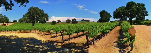 Photograph - Wine Country Panorama by Greg Norrell