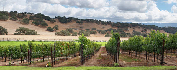 Wall Art - Photograph - Wine Country Scenic by S. Greg Panosian