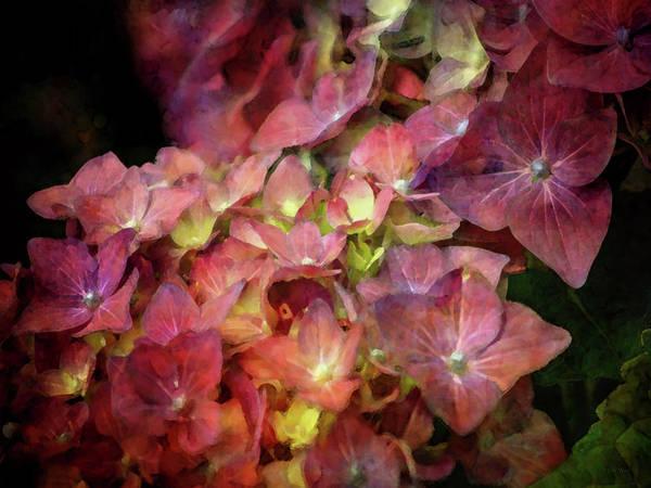 Photograph - Wine Hydrangea 6285 Idp_2 by Steven Ward