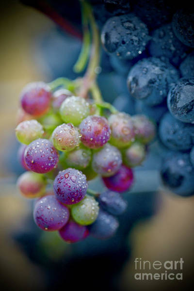 Wall Art - Photograph - Wine Time Close Up  by American School