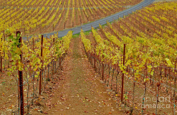 Wall Art - Photograph - Wine Time Vines 2 by American School