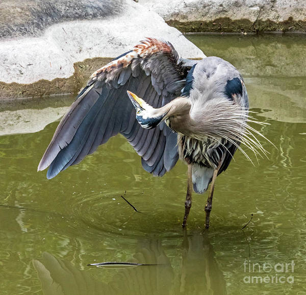 Photograph - Wing Cleaning by Kate Brown