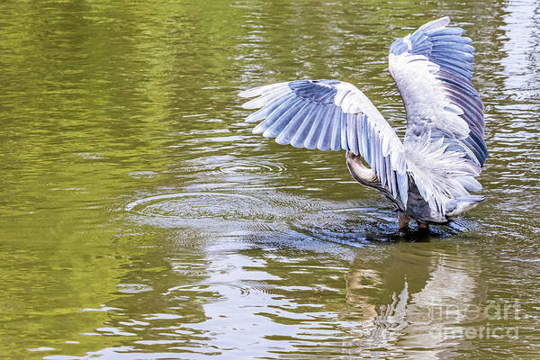 Photograph - Wing Exercise by Kate Brown
