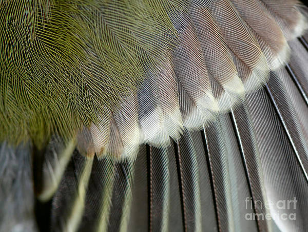 Border Wall Art - Photograph - Wing Of The Great Tit Close Up by Mycteria