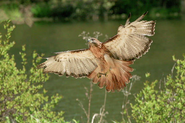 Photograph - Wing Span by Ronnie and Frances Howard