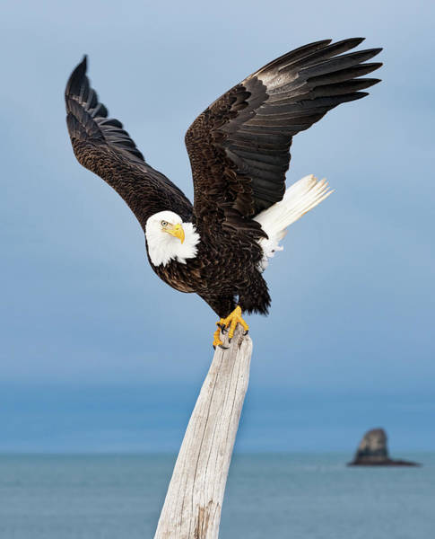 Photograph - Winged Sentry by Scott Bourne