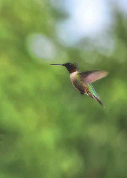 Photograph - Wings In Motion  by JAMART Photography