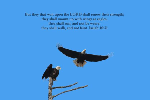 Wall Art - Photograph - Wings Like Eagles Isaiah 40 31 by Marlin and Laura Hum