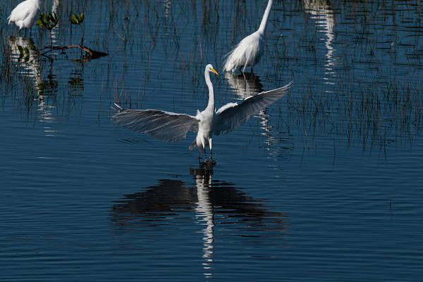 Photograph - Wings Spread by Dan Friend
