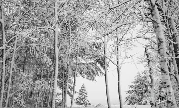 Photograph - Winter by Alana Ranney