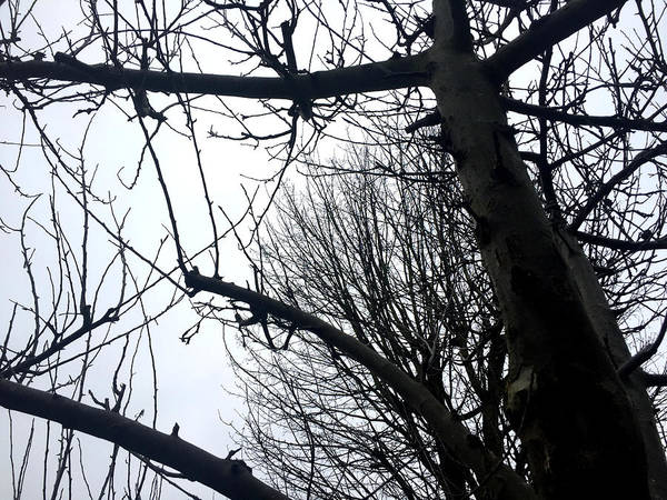 Photograph - Winter Bare Trees by Artist Dot