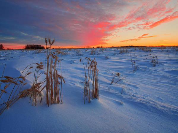 Photograph - Winter Barley by Dan Jurak