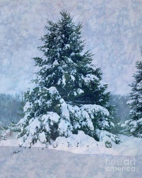 Photograph - Winter Beauty by Luther Fine Art