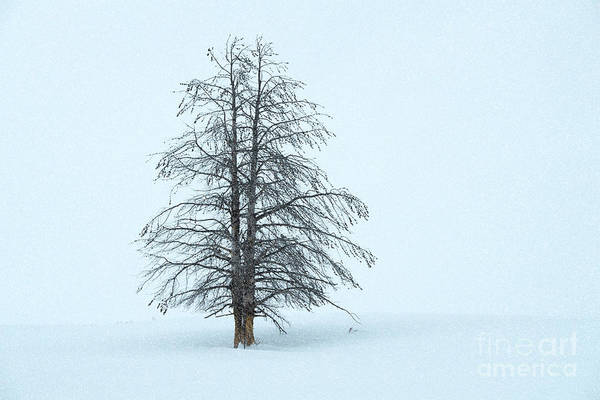 Wall Art - Photograph - Winter Beauty - Yellowstone National Park by Sandra Bronstein