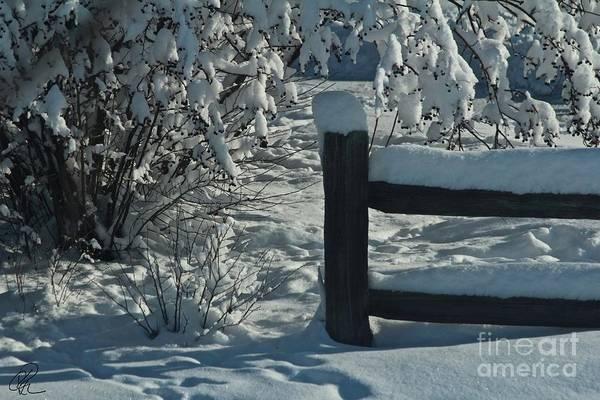 Photograph - Winter Berries by Ann E Robson