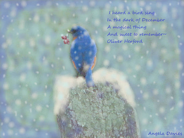 Bird Watercolor Mixed Media - Winter Blue Bird by Angela Davies