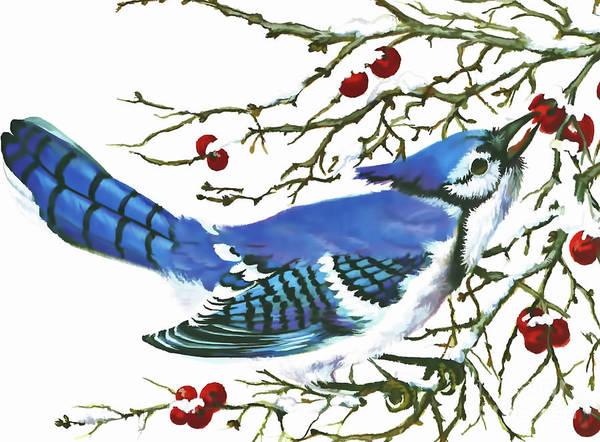 Digital Art - Winter Blue Jay by D Hackett