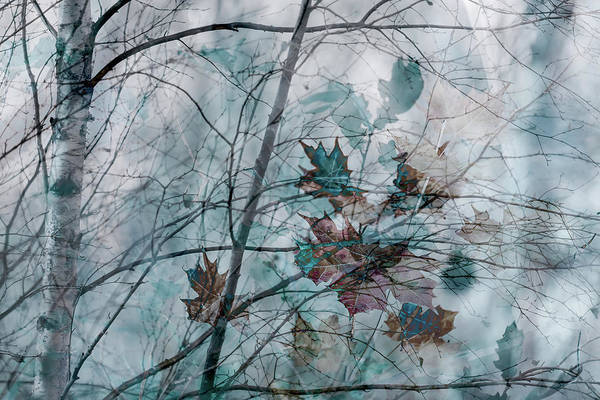 Photograph - Winter Blues by Glenys Garnett