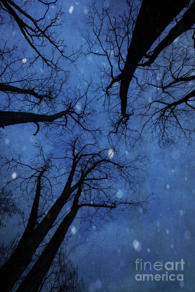 Wall Art - Photograph - Winter Blues by Juli Scalzi