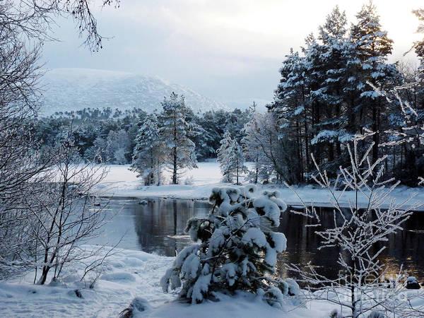 Photograph - Winter Calm - Loch Morlich by Phil Banks